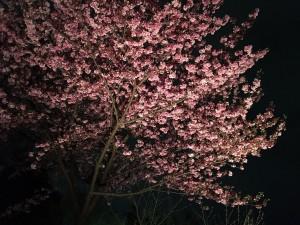 写真 2016-04-03 21 53 19